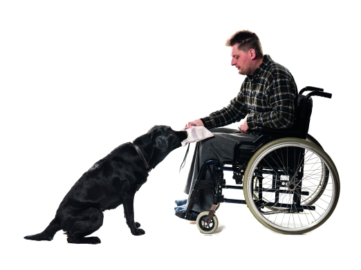 Aikuisten toimintaterapia eläinavusteisesti - Voimatassu