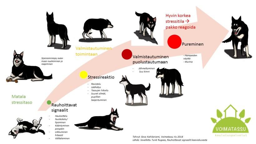 Rauhoittavat signaalit koira ja ihminen kuva